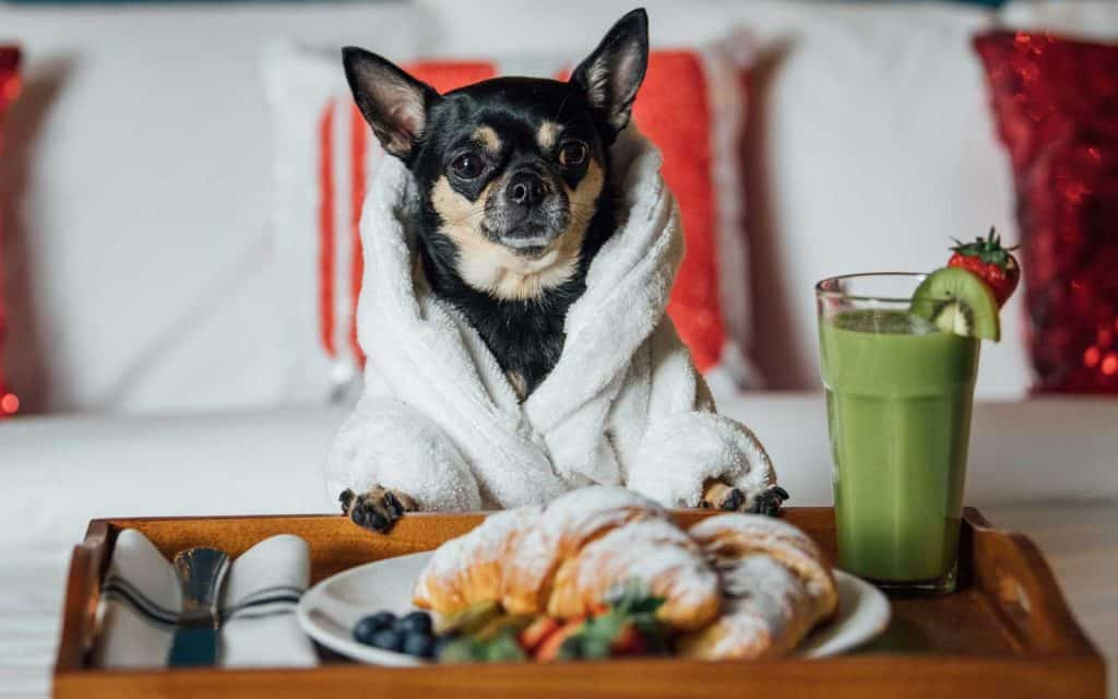 dog critic hotels breakfast