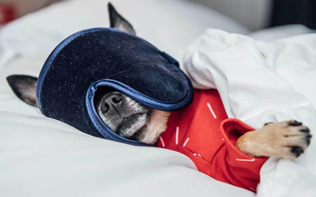 canine critic hotels sleep