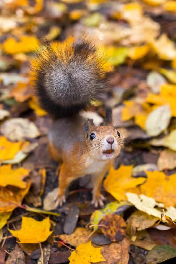 Squirrel Finland photo ossi saarinen