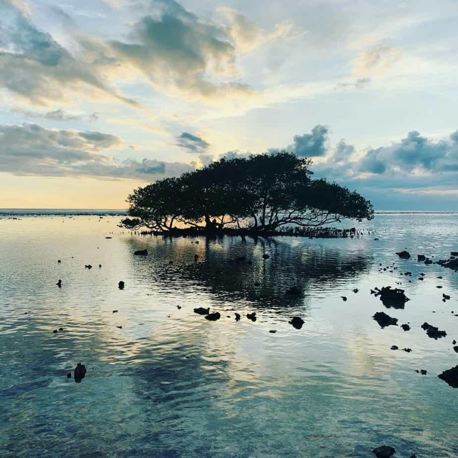 Mar y árbol de Bali
