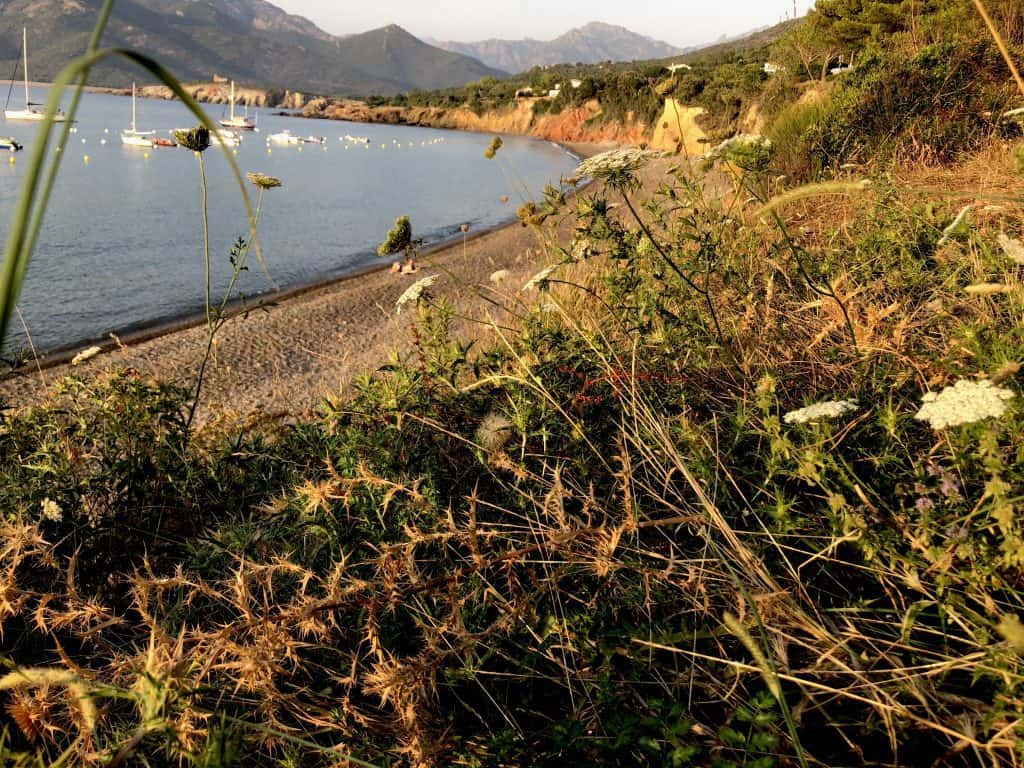 View from a beach with wild plants in Corsica